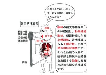 副交感神経.png