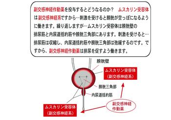 副交感神経作動薬.png