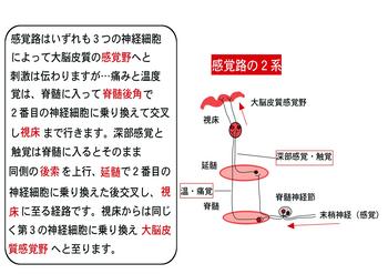 感覚路二系.png