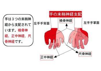 手の神経.png