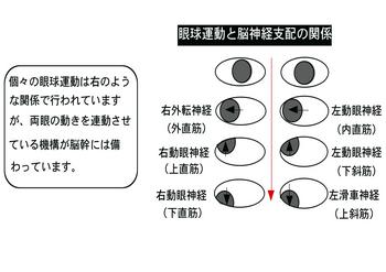 眼球運動.png
