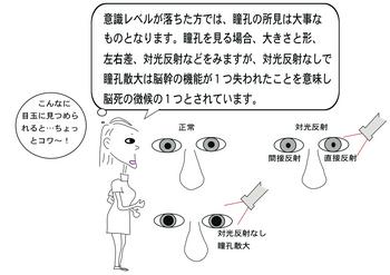 瞳孔.png